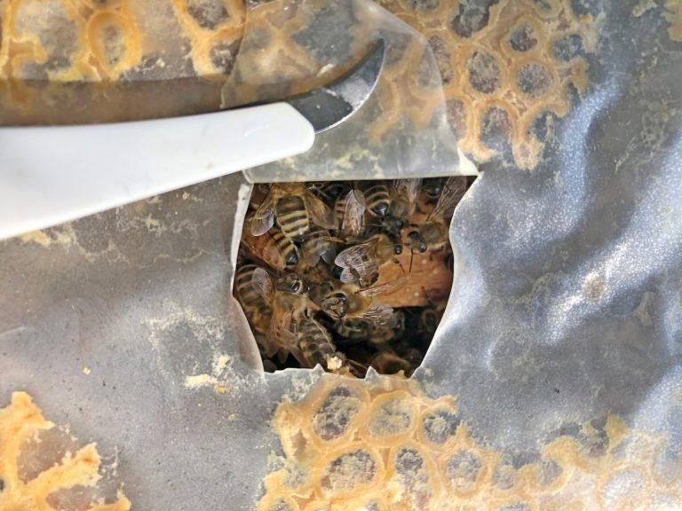 Bienen füttern im Winter – so geht's!